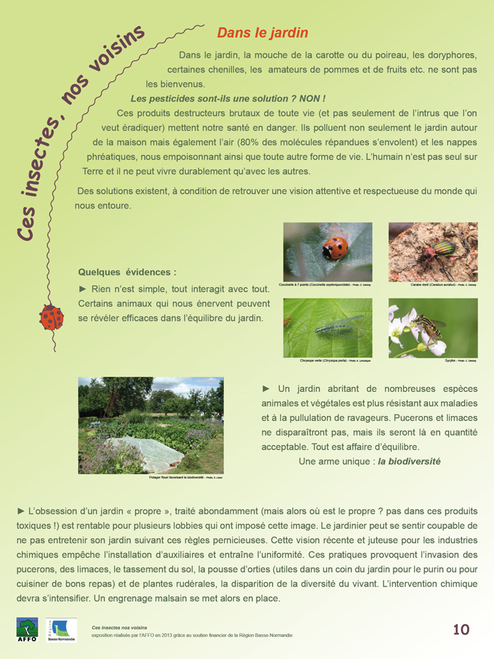 poster insecte 10