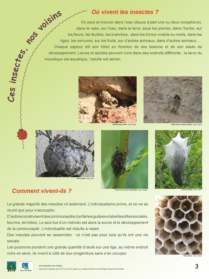 poster insecte 3