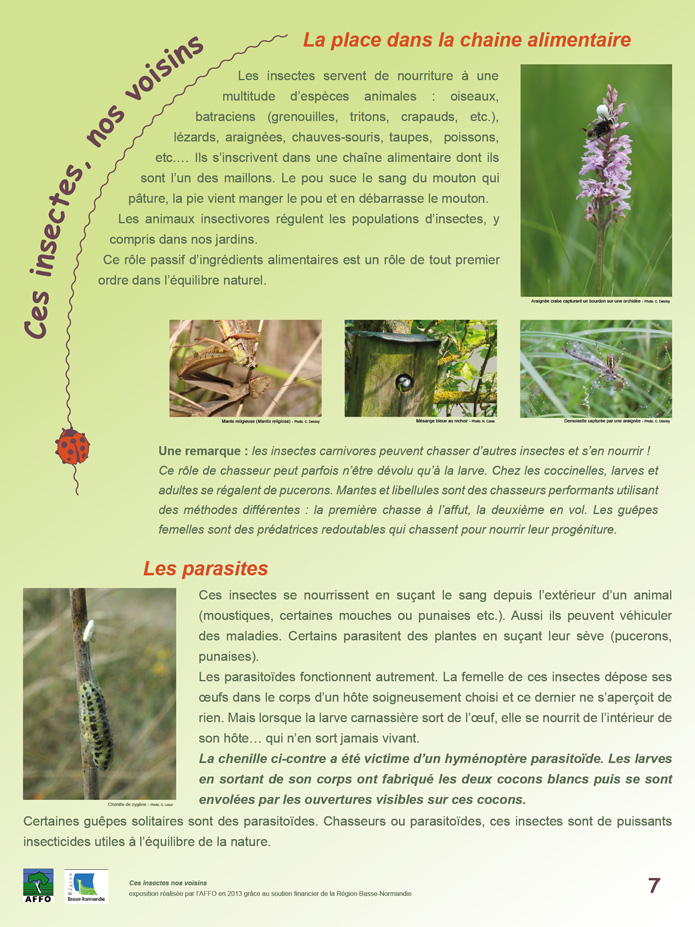 poster insecte 7